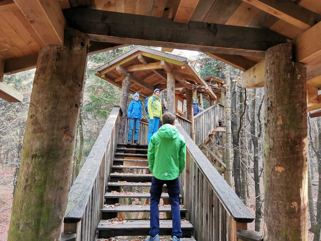 Vom Waldboden geht es über Stufen hinauf in die Baumkronen