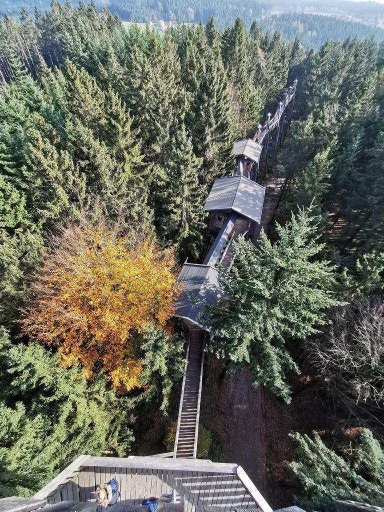 Der Baumkronenweg Kopfing: Über den Baumwipfeln durch den Wald wandern